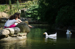 Sisters feeding ducks at the pond in a park. stock photos
