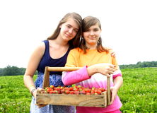 Sisters picking strawberries Royalty Free Stock Photography