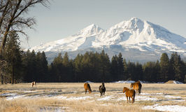 Three Sisters Horse Ranch Homestead Mountain Snow. Horses graze near the base of Three Sisters in Oregon State Royalty Free Stock Photos