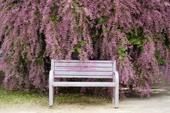 Sit down. With purple flower Royalty Free Stock Photography
