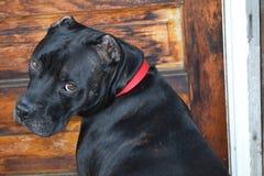 Sit Pretty. Pretty Dog in rustic setting Stock Image