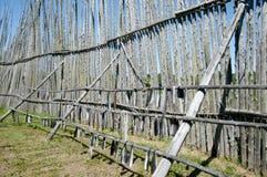 Site archéologique de Tsiionhiakwatha Droulers - Québec - Canada photos libres de droits