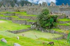 Site archéologique, Machu Picchu, Urubamba, Pérou, 02/08/2019 images libres de droits