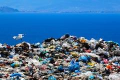 Site d'élimination des déchets avec des mouettes nettoyant pour la nourriture Image libre de droits