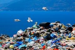 Site d'élimination des déchets avec des mouettes nettoyant pour la nourriture Images stock