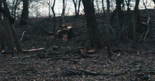 Site of illigal logging stock video