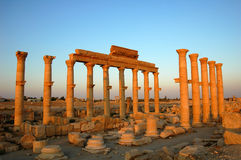 Site Of Palmyra Syria Royalty Free Stock Images