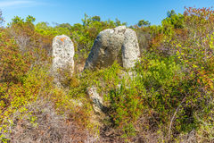 Site préhistorique oublié dans les collines de la Corse - 6 Photo stock