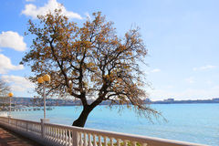 Site of seaside quay with a tree. Gelendzhik. Russia. Stock Photos