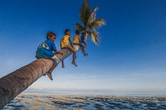 Siting on a tree. Denawan Island, Sabah Malaysia - April 29, 2016 : A goup of local kids siting on coconut tree's trunk overlooking the low tide ocean over a Royalty Free Stock Photography