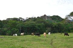 Sitio arqueológico de Tonina en Ocosingo, Chiapas Foto de archivo libre de regalías