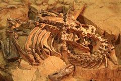 Sitio de la exploración del dinosaurio Imágenes de archivo libres de regalías