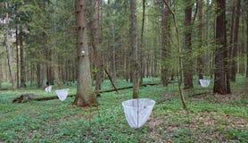 Sitio de la investigación del ekosystem del bosque Fotografía de archivo libre de regalías