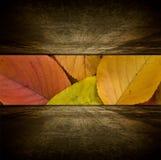 Sitio del otoño Imagen de archivo libre de regalías