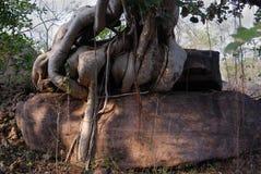 Sitio del patrimonio mundial de Bhimbetka- Imagenes de archivo