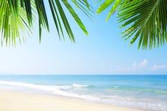 Sitio tropical Fotos de archivo