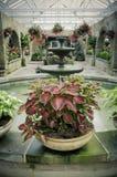 Sitio verde del jardín con las plantas hermosas Imagen de archivo