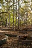 Sito di picnic della foresta della quercia Immagine Stock