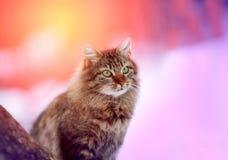 Sitta för katt som är utomhus- royaltyfria foton