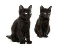Sitta för två svart kattungar som bort ser, 2 gamla som månader isoleras Arkivfoton
