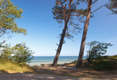 Sittande bank i det mest forrest på den baltiska kusten, Polen Royaltyfria Bilder