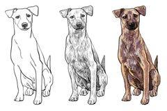 Sittande brun hund royaltyfri illustrationer