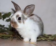 Sittande djur för roligt litet husdjur för kaninkanin päls- dekorativt royaltyfria bilder