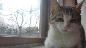 sittande fönster för katt Arkivbilder