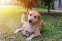 Sittande hund Fotografering för Bildbyråer