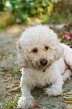 Sittande hund Arkivbild