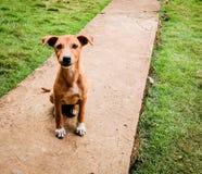 Sittande hund Arkivbilder