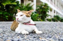 Sittande katt Arkivbild