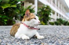 Sittande katt Fotografering för Bildbyråer