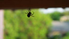 sittande spindelrengöringsduk arkivfilmer