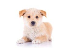 sittande stray för gullig hund Arkivfoton