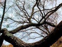 Sittande träd & mig royaltyfria bilder