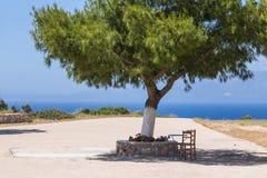 sittande tree under Arkivbilder