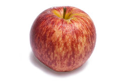 sittande white för äpplered Royaltyfri Bild