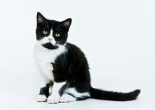 sittande white för kattunge Royaltyfria Bilder