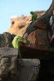 Sittiche stehen auf Wänden in der Ruine bei Qutb still, das minar ist in Neu-Delhi (Indien) Lizenzfreie Stockfotografie