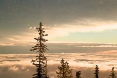 Sitting above the Clouds. Sunrise through the snow sitting over the clouds Royalty Free Stock Photo