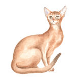 The sitting Abyssinian  cat. Image of a thoroughbred cat. Watercolor painting Stock Photos