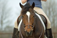 Sitting on Bay Horse. Girl sitting on bay horse taking a rest during riding Stock Images