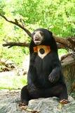 Sitting Bear Stock Photos
