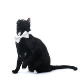 Sitting black cat isolated over the white background Stock Images