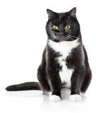 Sitting black cat with yellow eyes Royalty Free Stock Photos