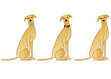 Sitting brouwn dog with collar variations Royalty Free Stock Images