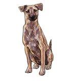 Sitting brown dog Royalty Free Stock Photos