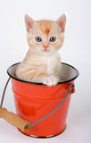Sitting in a bucket. Little red kitten sitting in a red bucket Stock Photos