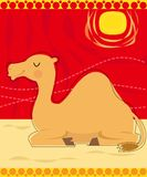 Sitting Camel Stock Images